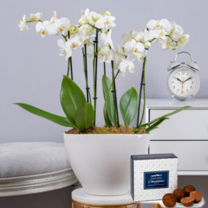 Luxury Orchid - Orchid Plants - Orchid Delivery - Plant Delivery - Indoor Plants - Houseplants